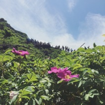Flowers at Niagara Falls.