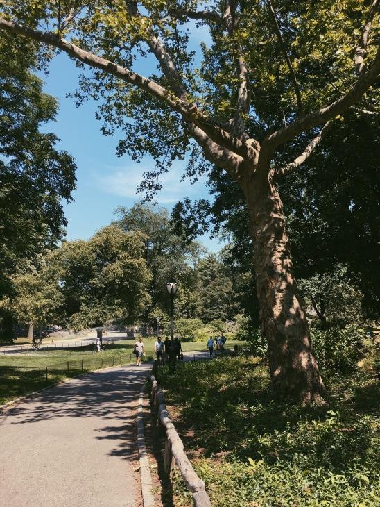 A sweaty walk through Central Park in New York City.