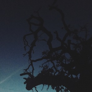 Gnarly tree in Austin, Texas.