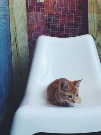 cat cafe kitten