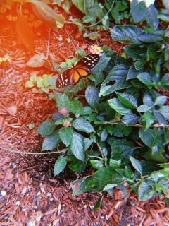 Butterfly garden in Mackinac Island